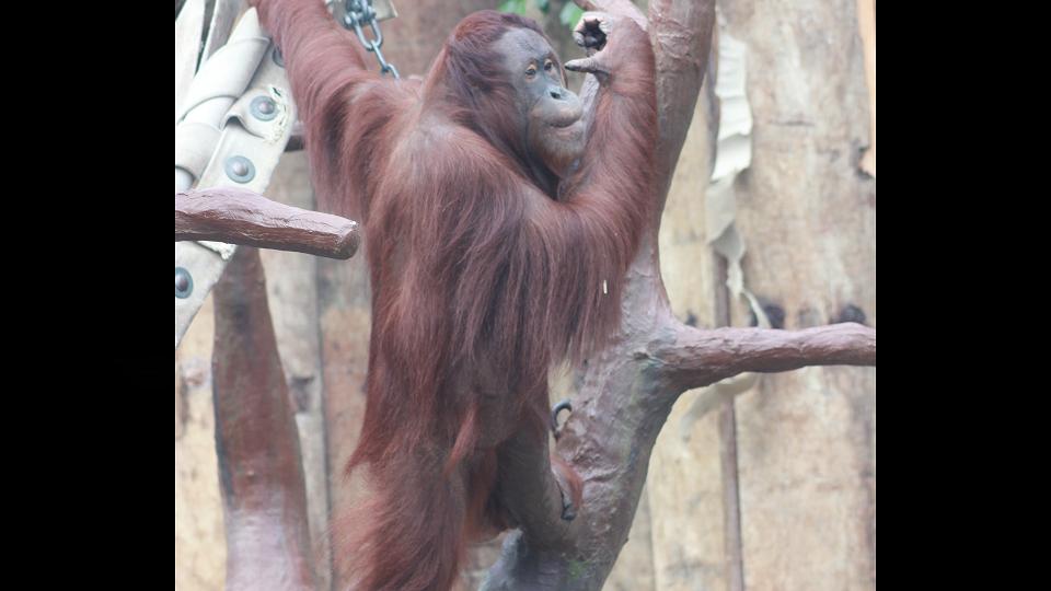 Zoo Krefeld – Spendenaufruf